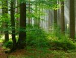 Fritjof Capra on Nature & Community