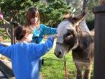 SpiritHorse: Helping Children With Disabilities Soar