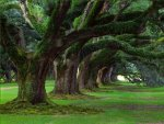 The Restorative Power of Trees