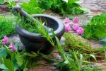 Living Medicine: On Plant Intelligence and Natural Healing