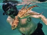 Why We Should Take World Octopus Day Seriously