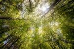 Deciphering Words in the Woods