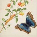Her art informed science: Maria Sibylla Merian