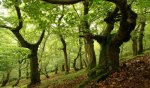 How the trees secretly talk to each other