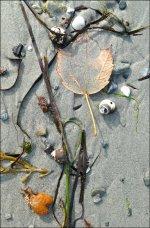 Seaweed love letters
