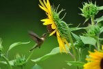 Practicing the Art of Wonder: Lessons from the Hummingbird